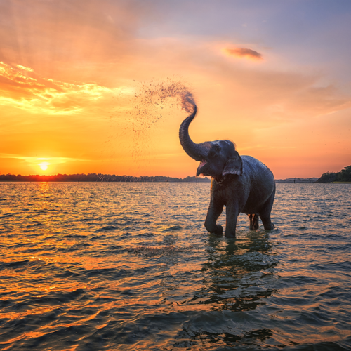 Top 5 photography spots in Sri Lanka