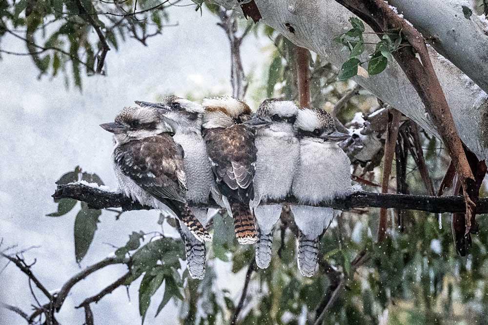 Top 5 photography spots in Alpine Australia