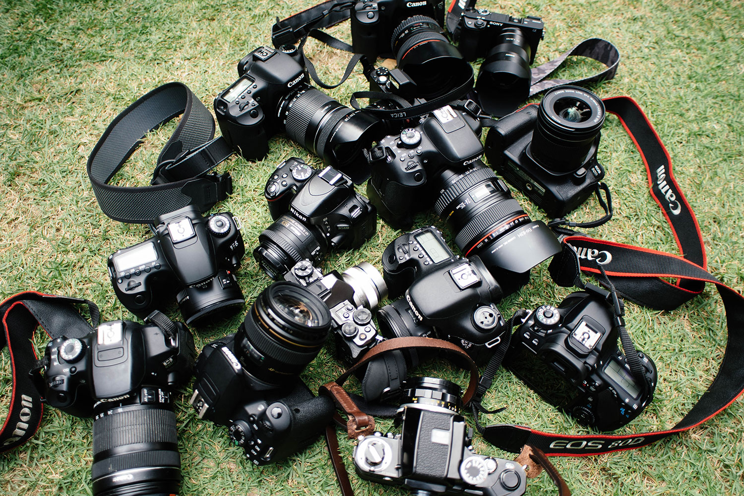 An expert guide to the best entry-level DSLR cameras
